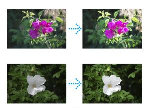 オペレーターが写真の色を調整します。